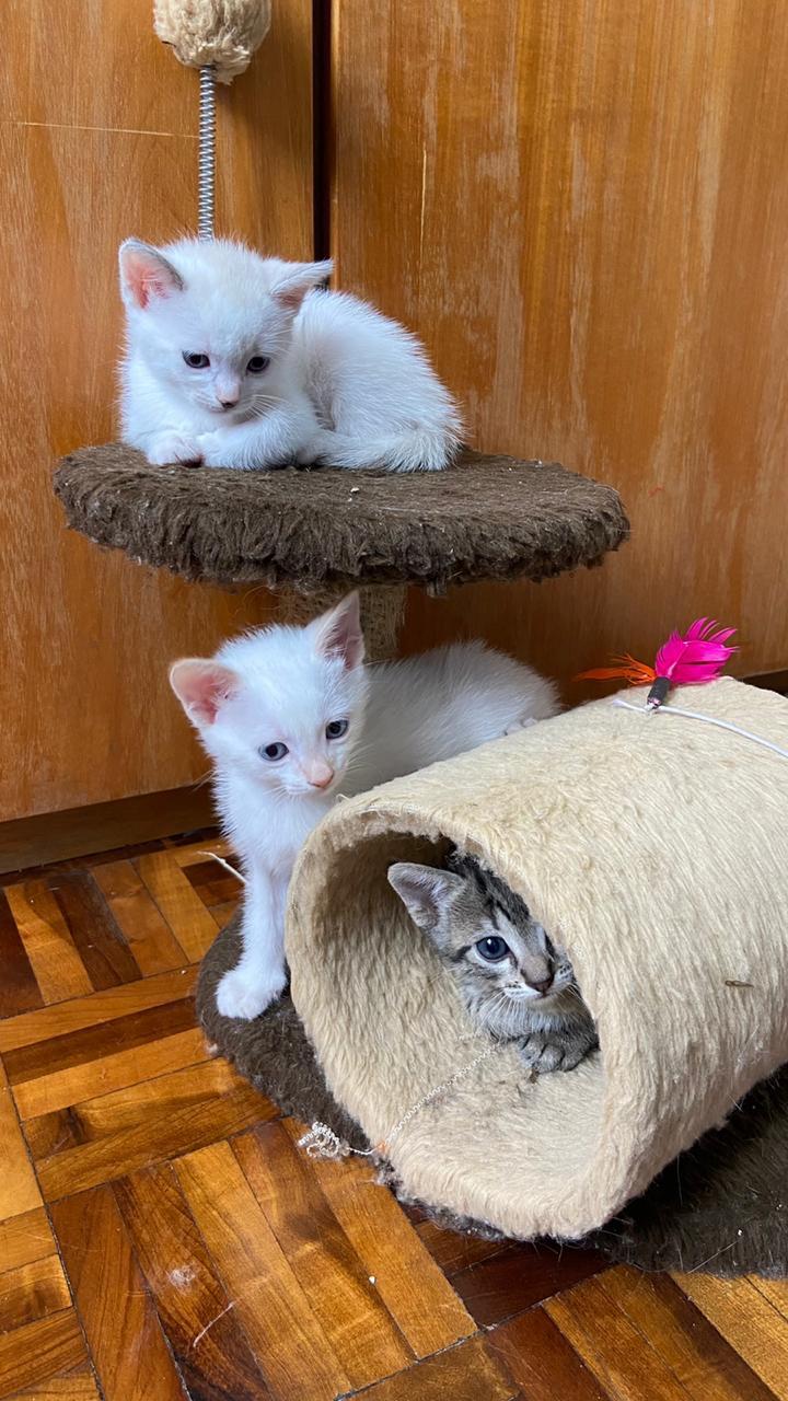 3 irmãozinhos