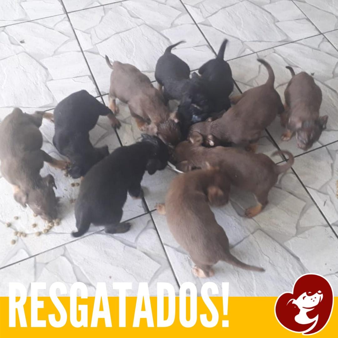 Resgatados