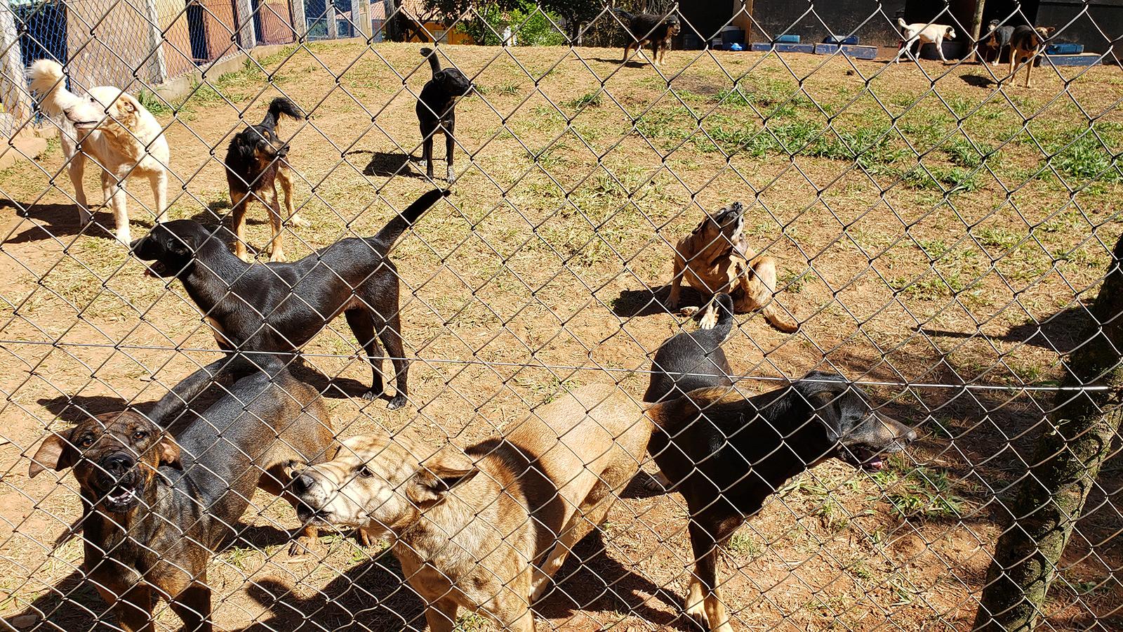 18 Cães alimentados por 30 dias!