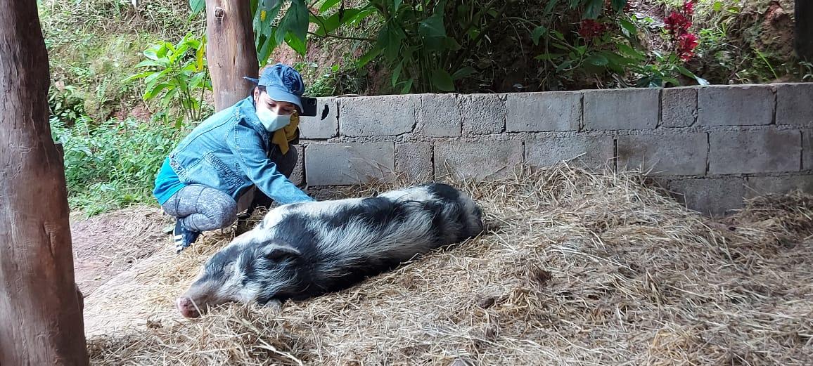 Mutirão Santuário Animal Sente