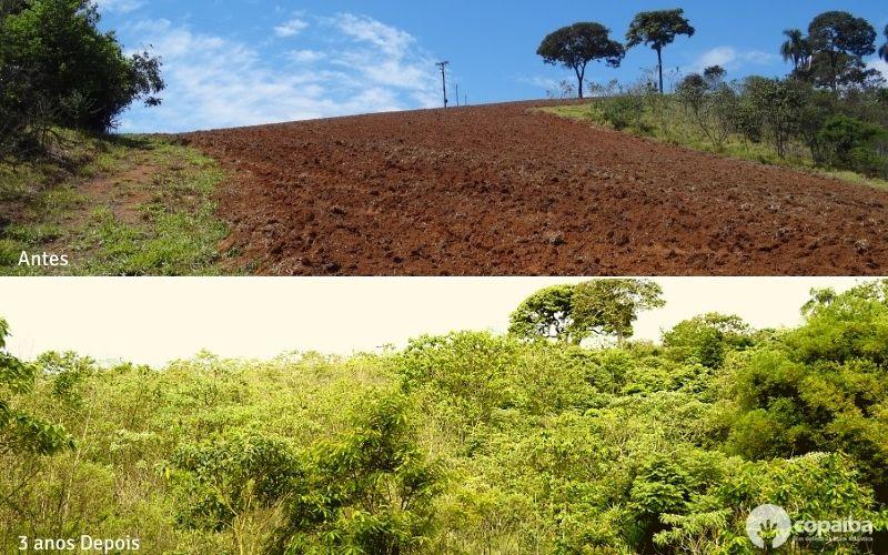 8 árvore plantada e cuidada por dois anos!