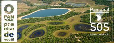 492 Plantio e manutenção de 1 muda no Pantanal